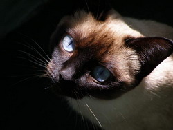 Квазар, исполненный очей или кошачий триллер?