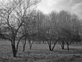 Чёрнота деревьев