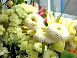 О чем «говорят» цветы?