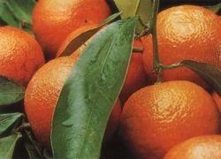 Чем полезен мандарин?