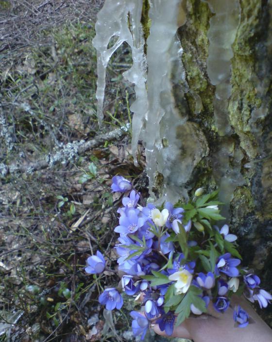 Замёрзшая весна