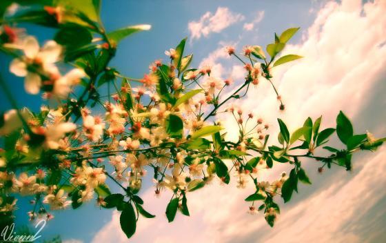 ...весна.