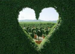 10 советов, как сделать сердечко