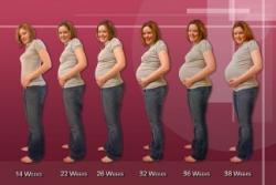 Как вести календарь беременности по неделям?