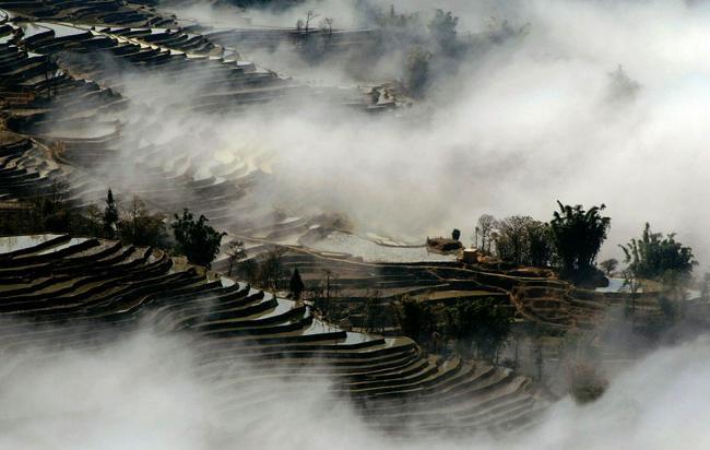 Китай собирается увеличить поставки зерна. Рисовые поля