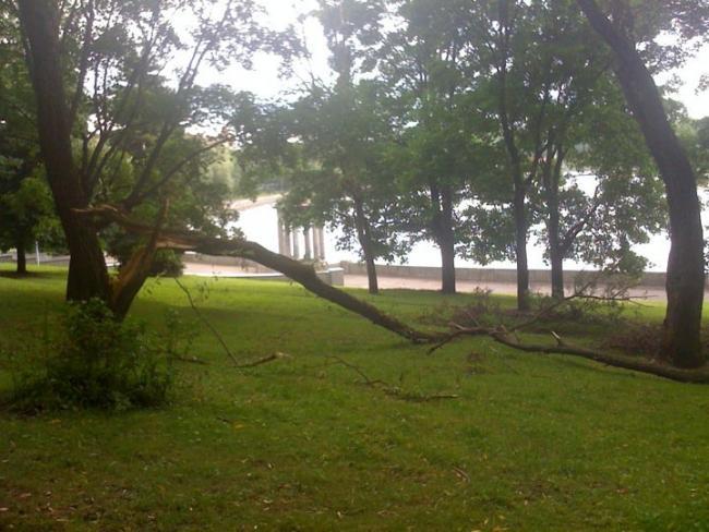После грозы в Минске повалило деревья