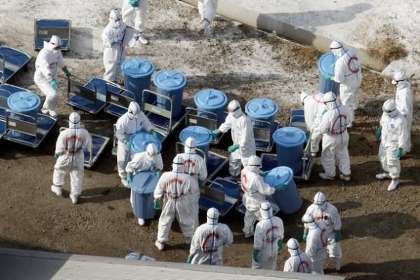 Птичий грипп опять в Японии