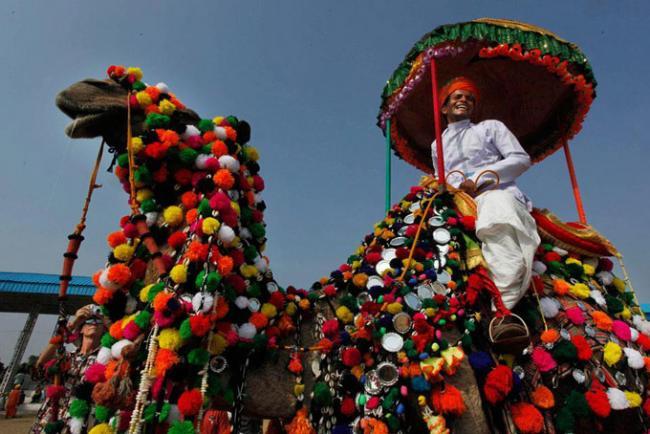 Верблюжий конкурс красоты в городе Пушкар, Раджастан