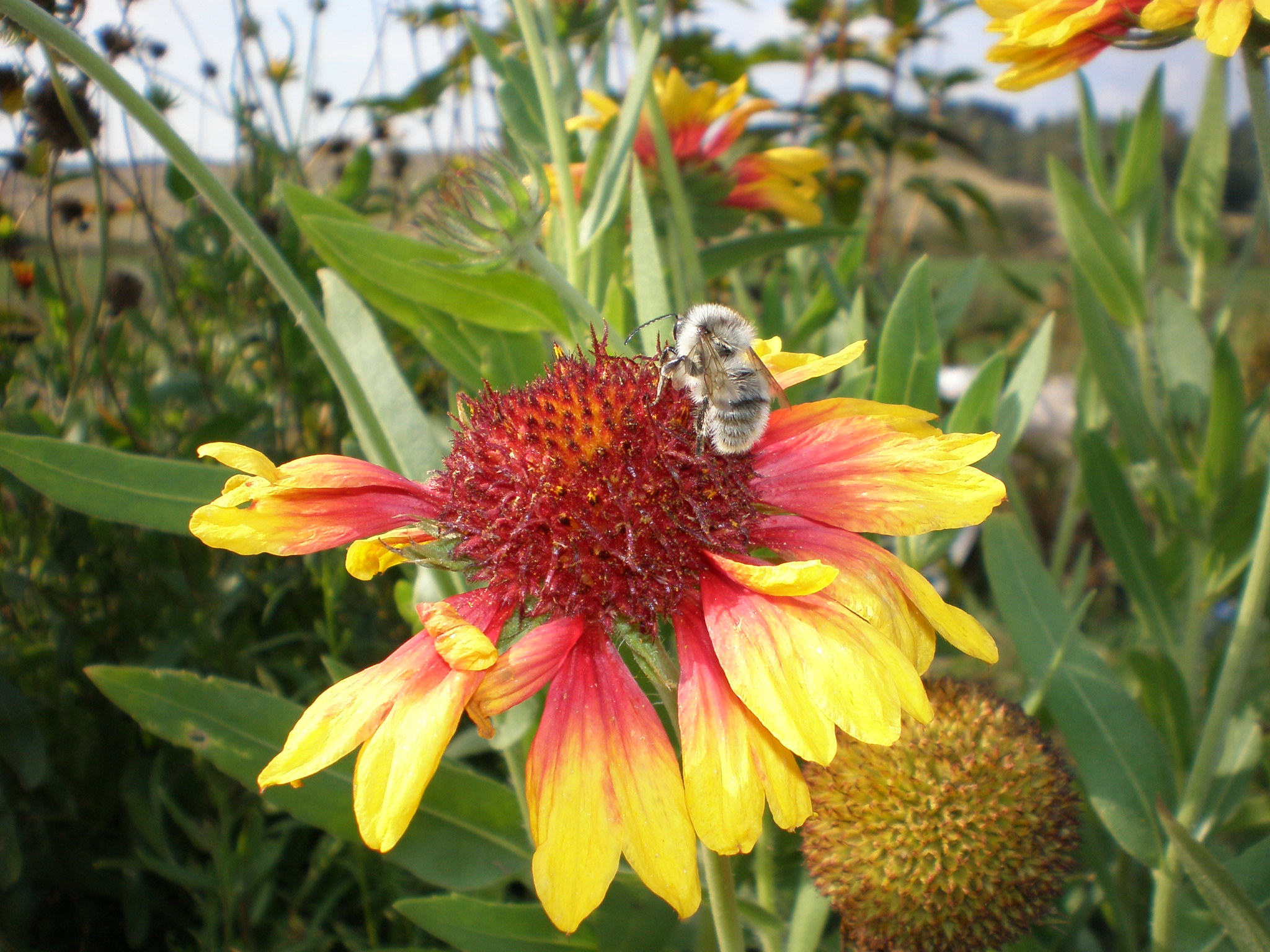 Улетающая пчела