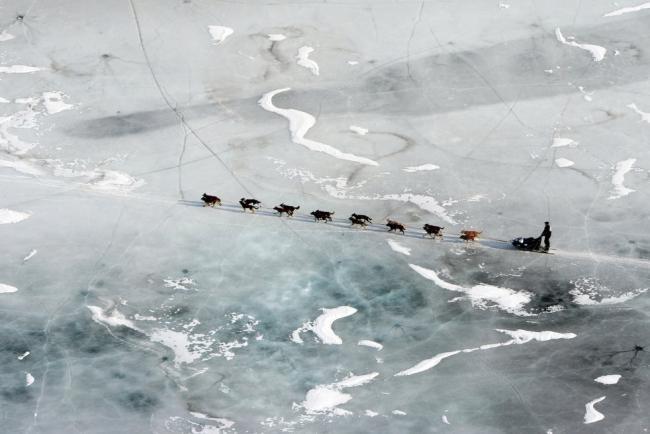 На Аляске проходит многодневная гонка на собачьих упряжках «Iditarod»