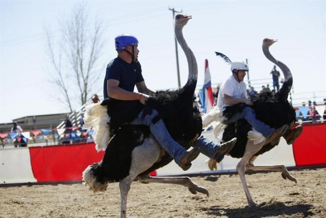 В Аризоне прошли гонки на страусах